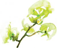 alma-de-cattleya-label-sauvignon-blanc