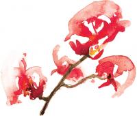 Cabernet Sauvignon Label Flower